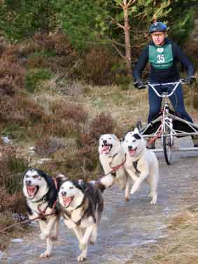 Visit the Cairngorm Sled Dog Adventure Centre Aviemore Sled Dog Rally organised by the Siberian Husky Club of Great Britain takes place at Glenmore